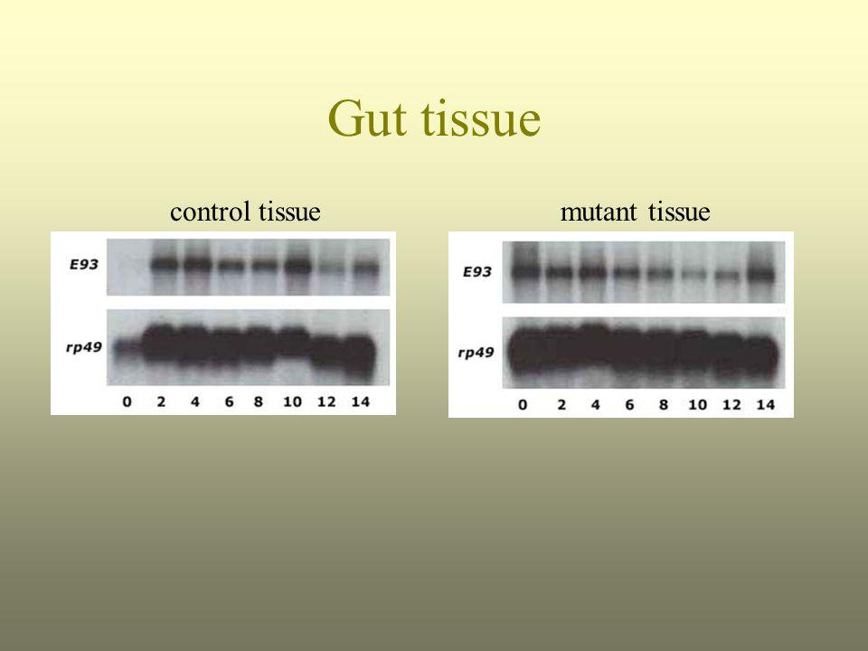 Gut tissue mutant tissuecontrol tissue