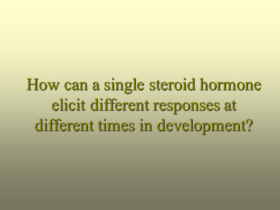 How can a single steroid hormone elicit different responses at different times in development