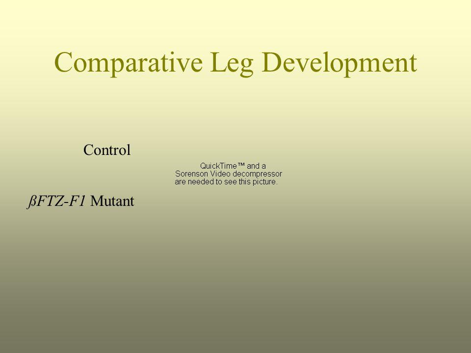 Comparative Leg Development Control ßFTZ-F1 Mutant