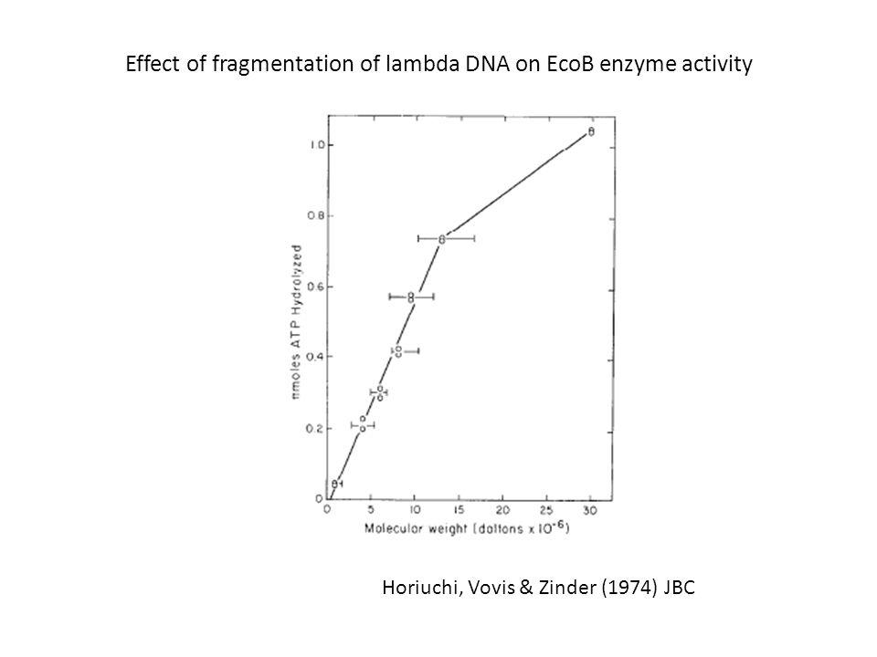 Effect of fragmentation of lambda DNA on EcoB enzyme activity