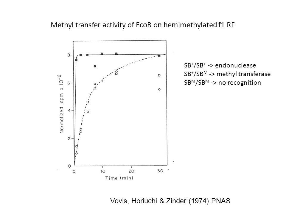 Vovis, Horiuchi & Zinder (1974) PNAS Methyl transfer activity of EcoB on hemimethylated f1 RF SB + /SB + -> endonuclease SB + /SB M -> methyl transferase SB M /SB M -> no recognition
