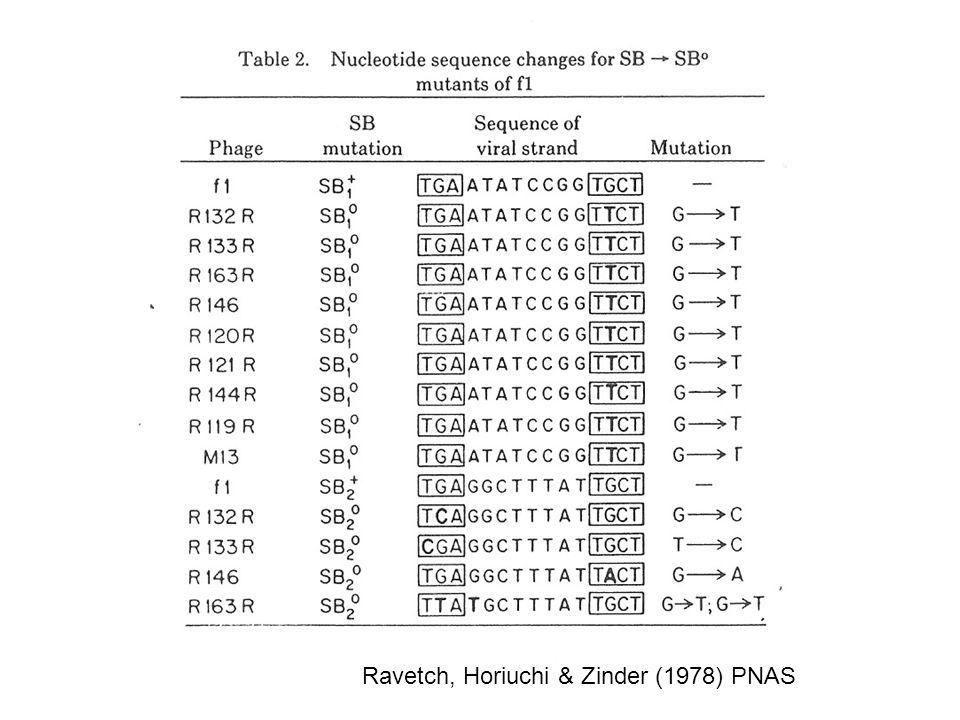 Ravetch, Horiuchi & Zinder (1978) PNAS