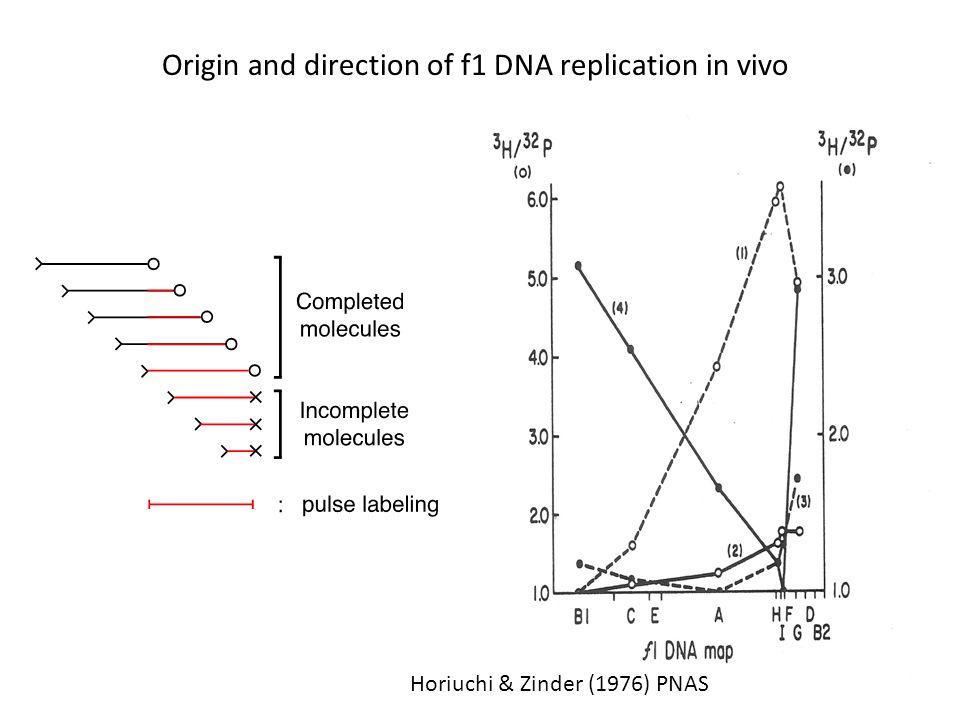 Horiuchi & Zinder (1976) PNAS Origin and direction of f1 DNA replication in vivo