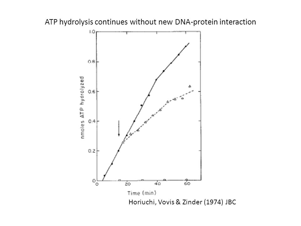 Horiuchi, Vovis & Zinder (1974) JBC ATP hydrolysis continues without new DNA-protein interaction