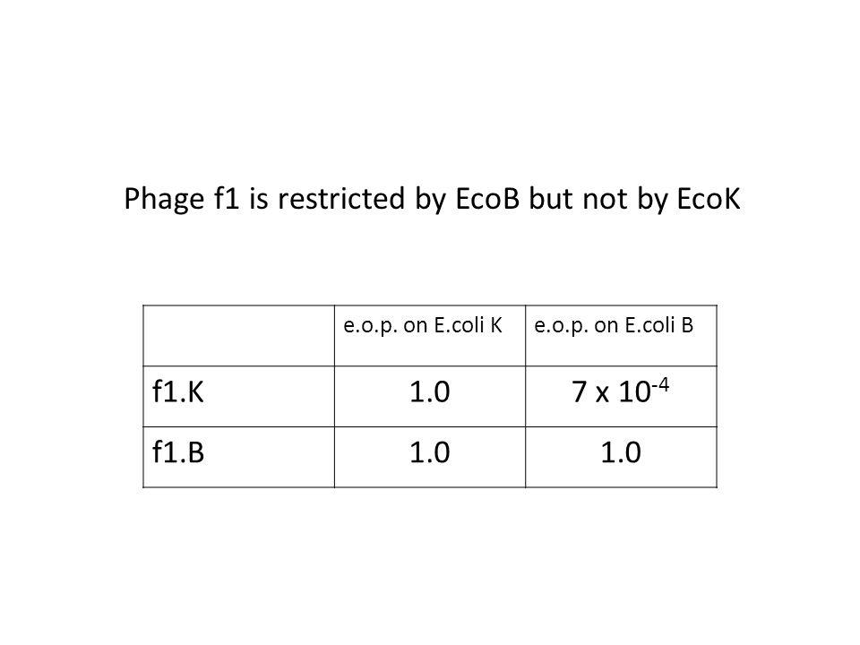 e.o.p. on E.coli Ke.o.p.