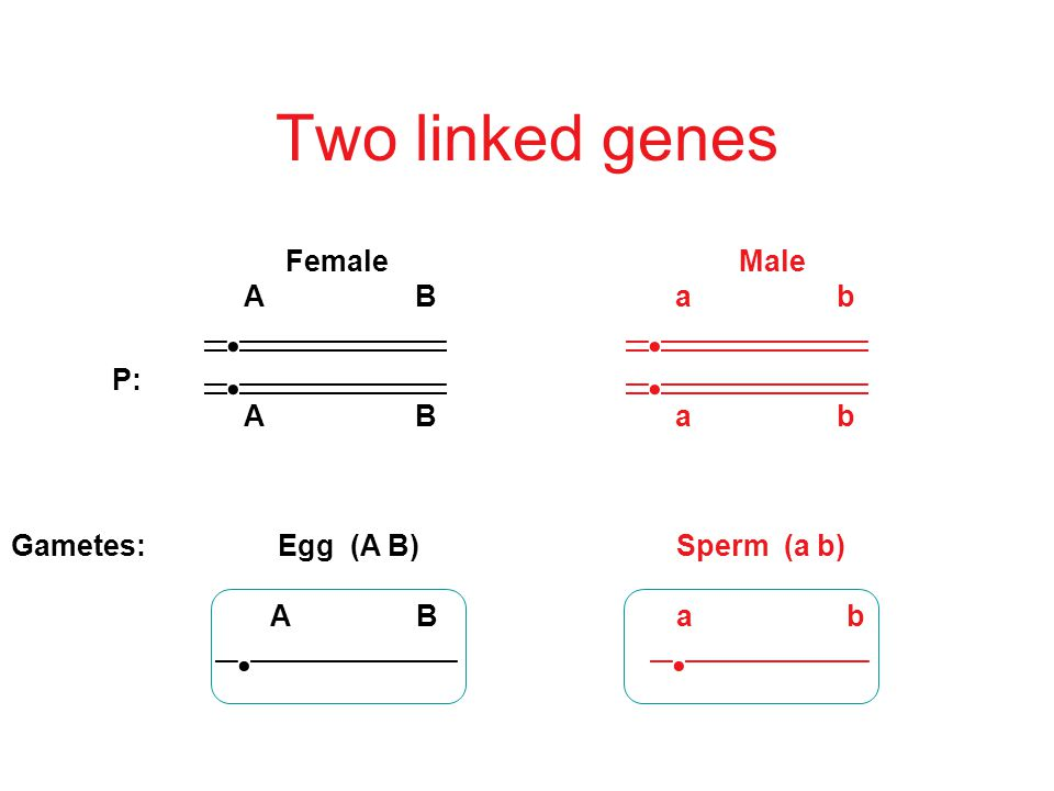 But what if the genes are on the same chromosome.