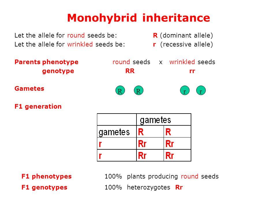 Monohybrid inheritance Let the allele for round seeds be: R (dominant allele) Let the allele for wrinkled seeds be: r (recessive allele) Parentsphenotype round seeds x wrinkled seeds genotypeRR rr Gametes F1 generation RRrr F1 phenotypes100% plants producing round seeds F1 genotypes100% heterozygotes Rr