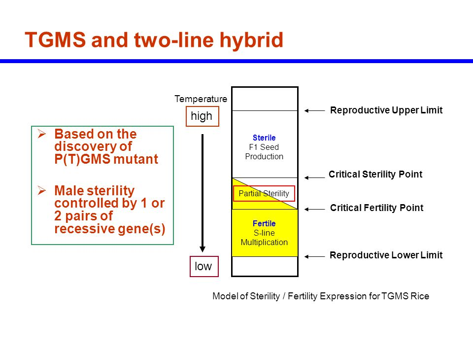 TGMS and two-line hybrid  Based on the discovery of P(T)GMS mutant  Male sterility controlled by 1 or 2 pairs of recessive gene(s) Fertile S-line Mu