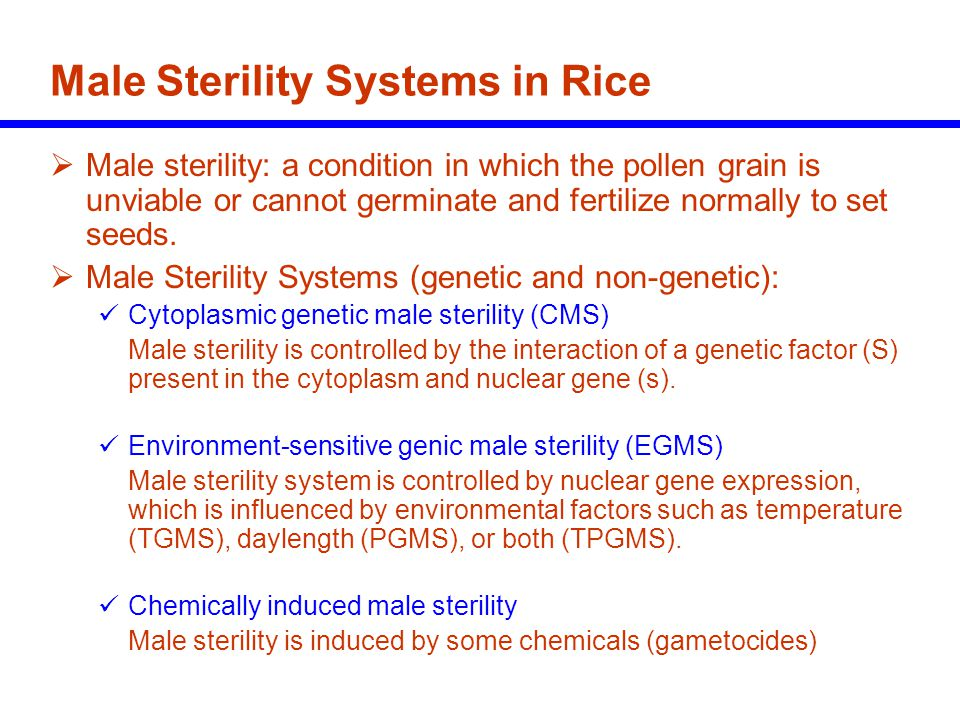 Brief history of hybrid rice 1926 - Heterosis in rice reported 1964 - China started hybrid rice research 1970 - China discovered a commercially usable genetic tool for hybrid rice (male sterility in a wild rice = Wide Abortive ) 1973 - PTGMS rice was found in China 1974 - First commercial three-line rice hybrid released in China 1976 - Large scale hybrid rice commercialization began in China 1979 - IRRI revived research on hybrid rice 1981 - PTGMS rice genetics and application was confirmed 1982 - Yield superiority of rice hybrids in the tropics confirmed (IRRI) 1990s - India and Vietnam started hybrid rice programs with IRRI 1991 - More than 50% of China's riceland planted to hybrids 1994 - First commercial two-line rice hybrid released in China 1994 - 1998 - Commercial rice hybrids released in India, Philippines Vietnam