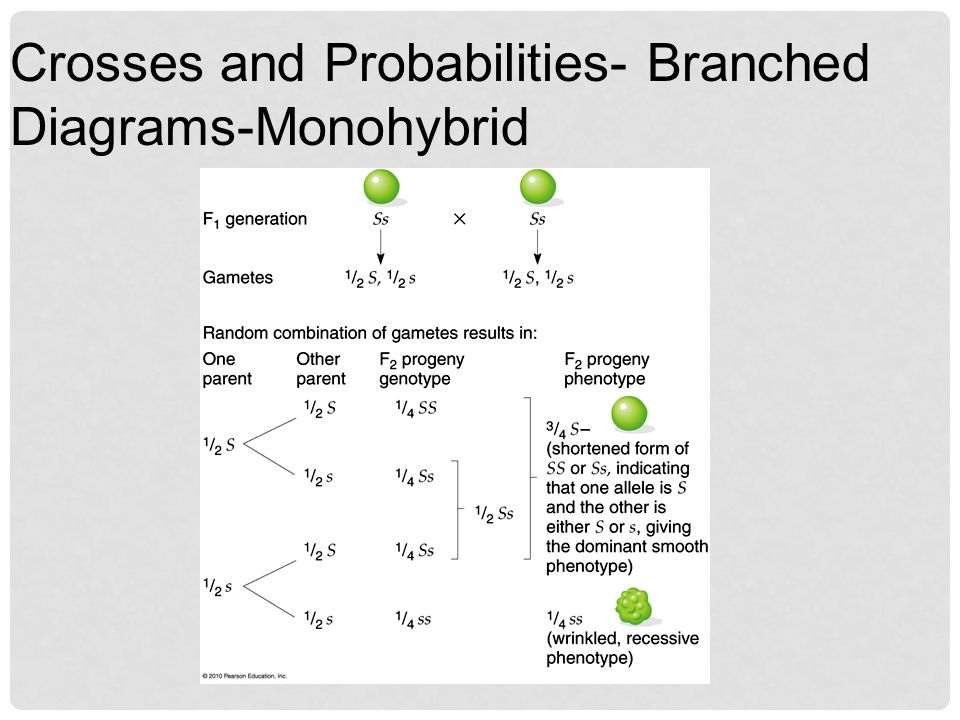 Crosses and Probabilities- Branched Diagrams-Monohybrid