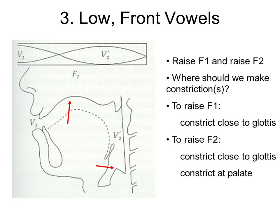 3. Low, Front Vowels Raise F1 and raise F2 Where should we make constriction(s).