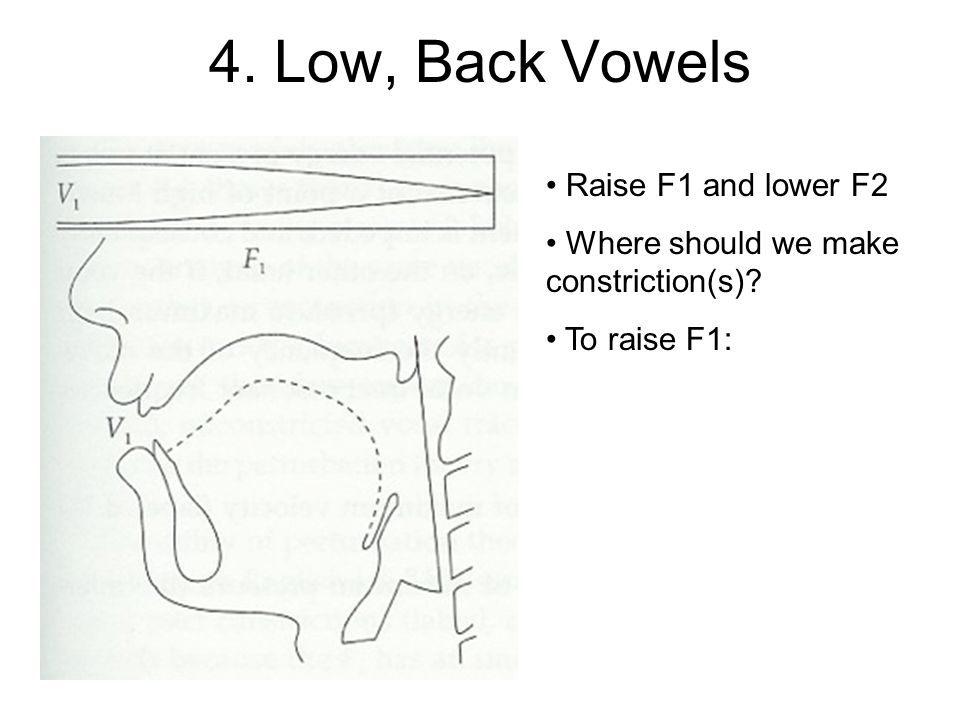 4. Low, Back Vowels Raise F1 and lower F2 Where should we make constriction(s)
