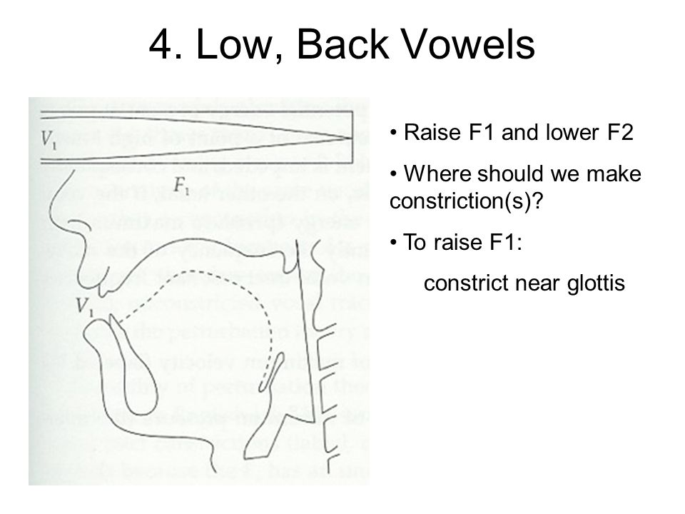 4. Low, Back Vowels Raise F1 and lower F2 Where should we make constriction(s) To raise F1: