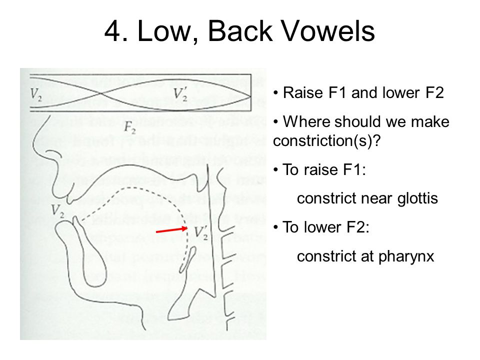 4. Low, Back Vowels Raise F1 and lower F2 Where should we make constriction(s).