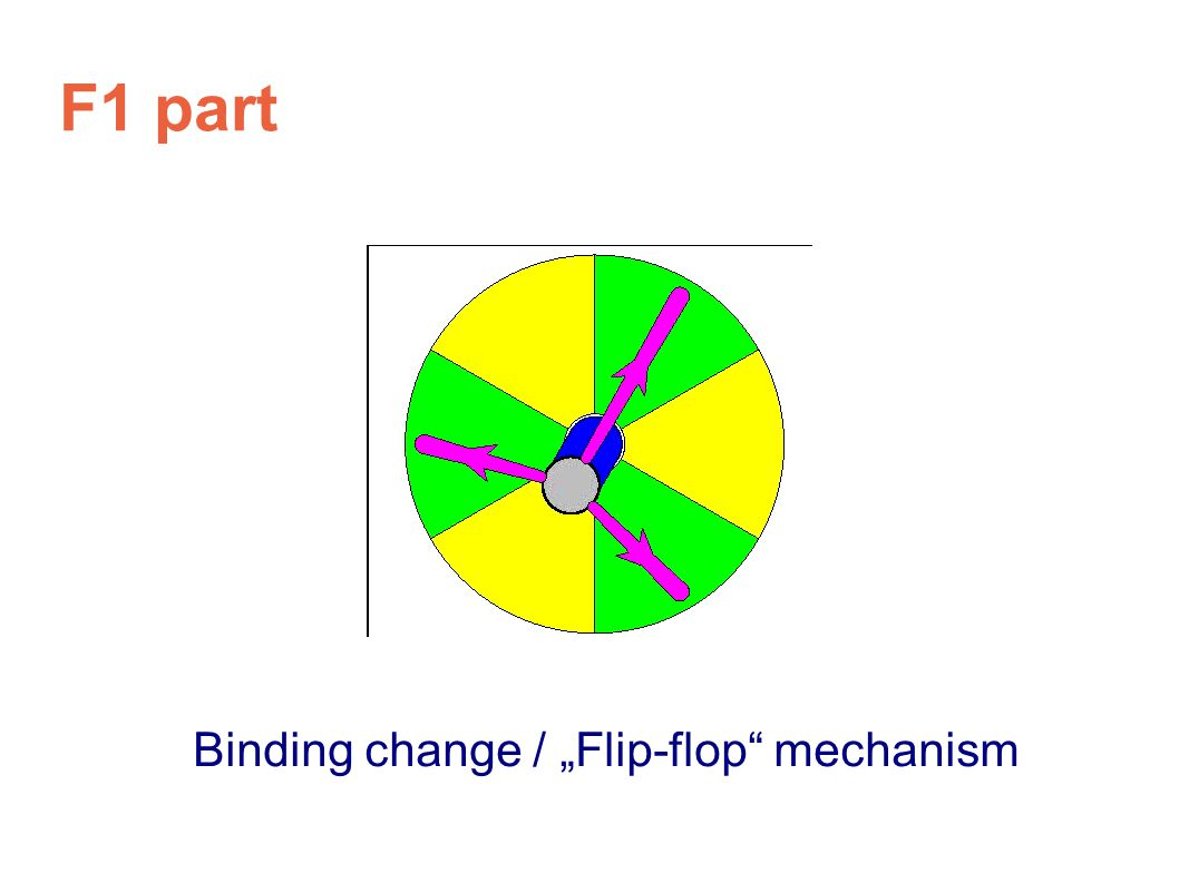 "F1 part Binding change / ""Flip-flop mechanism"