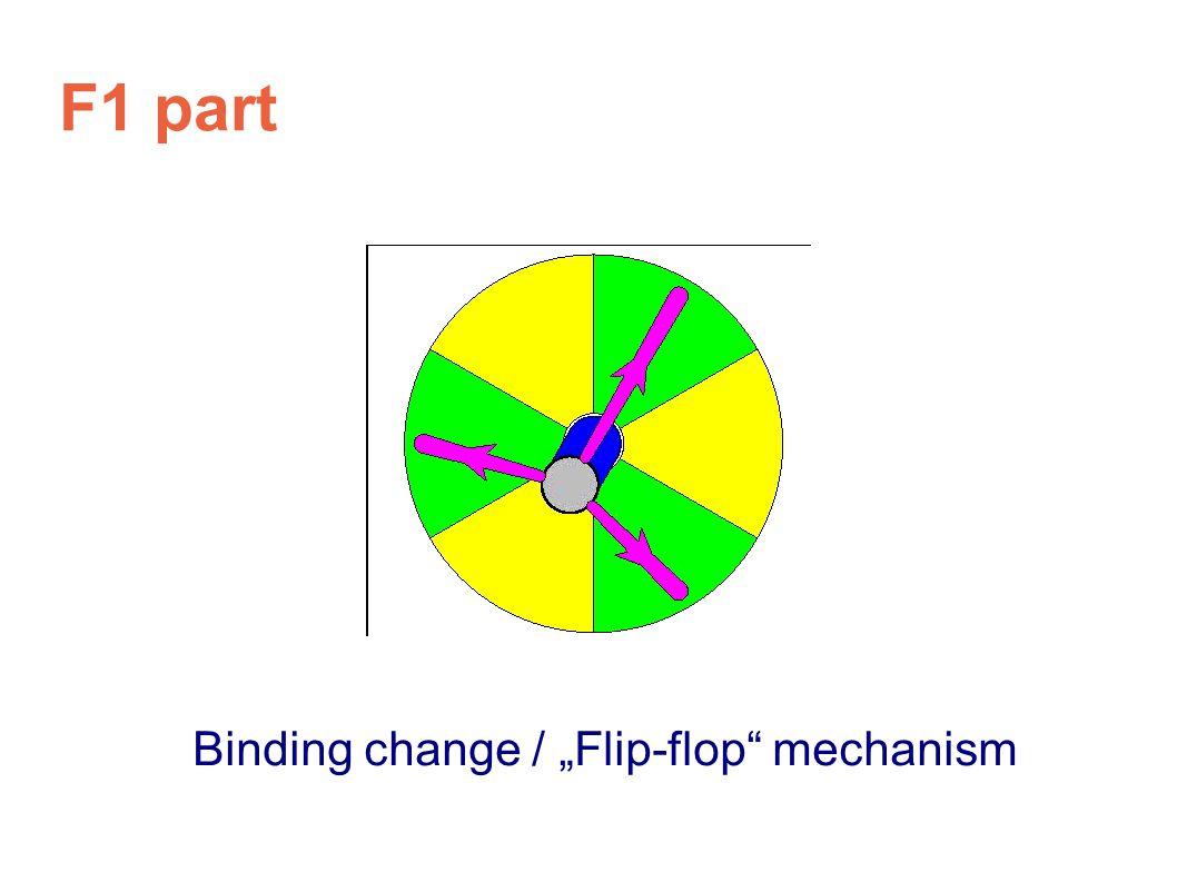 """F1 part Binding change / """"Flip-flop"""" mechanism"""