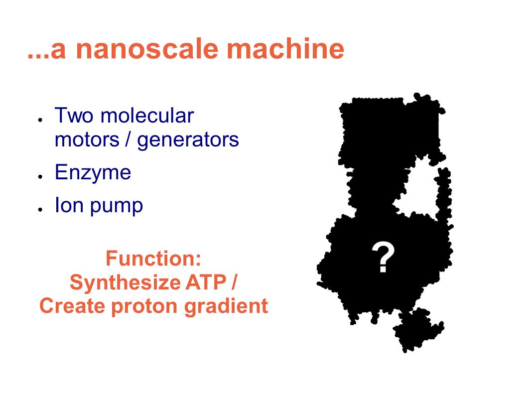 ...a nanoscale machine ● Two molecular motors / generators ● Enzyme ● Ion pump Function: Synthesize ATP / Create proton gradient