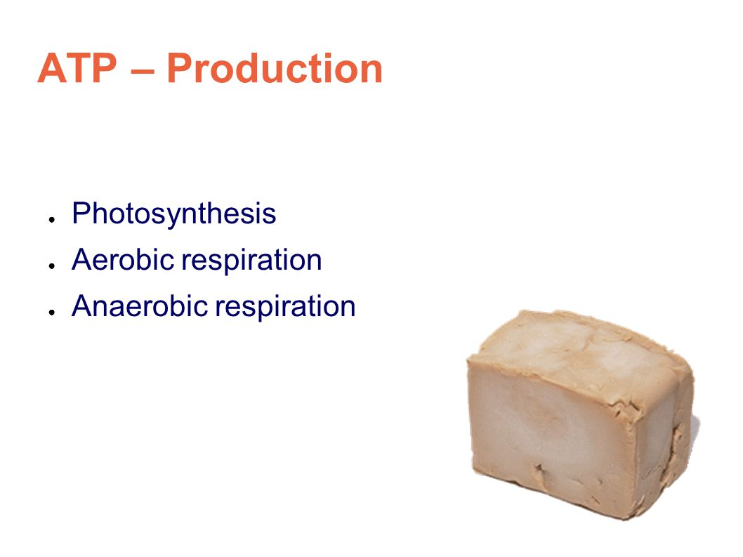 ATP – Production ● Photosynthesis ● Aerobic respiration ● Anaerobic respiration