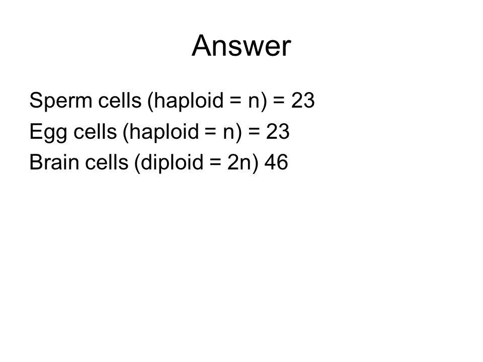 Answer Sperm cells (haploid = n) = 23 Egg cells (haploid = n) = 23 Brain cells (diploid = 2n) 46