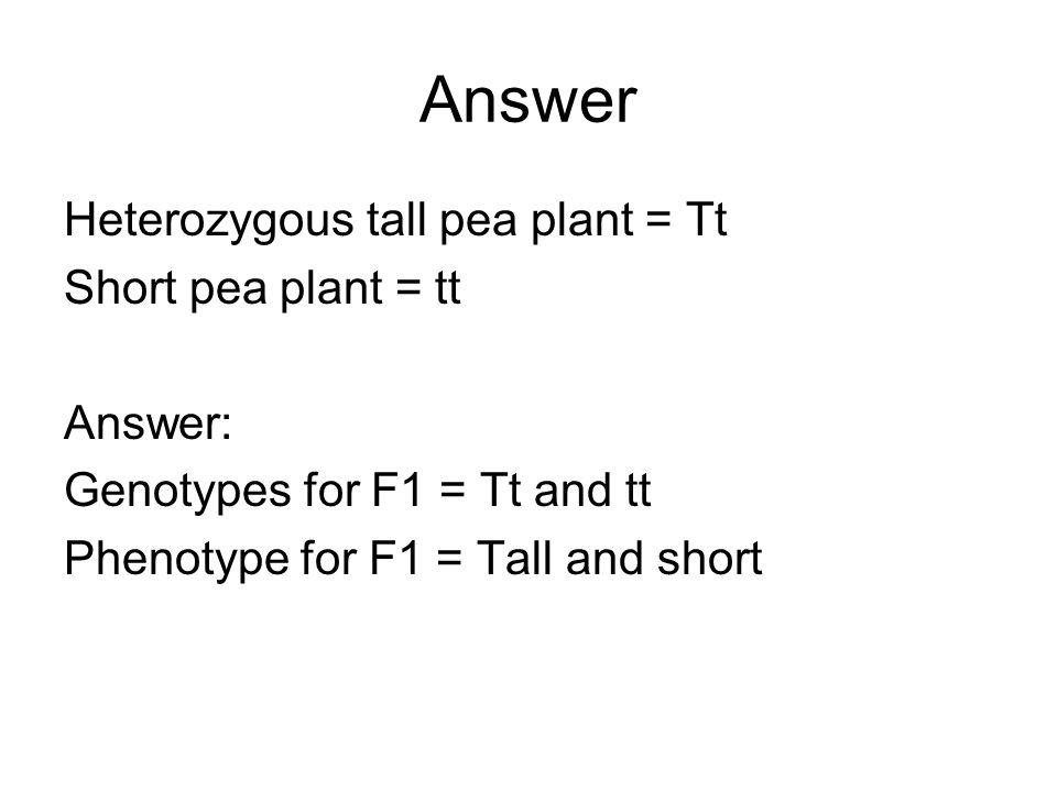 Answer Heterozygous tall pea plant = Tt Short pea plant = tt Answer: Genotypes for F1 = Tt and tt Phenotype for F1 = Tall and short