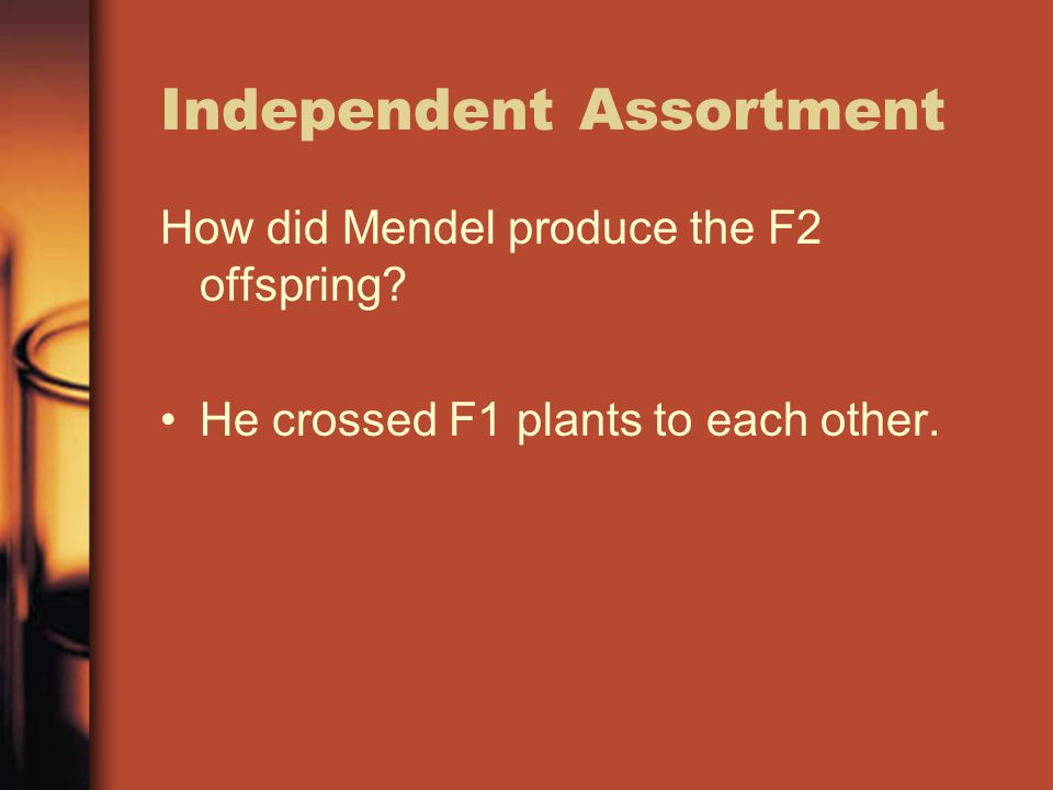 Independent Assortment How did Mendel produce the F2 offspring? He crossed F1 plants to each other.