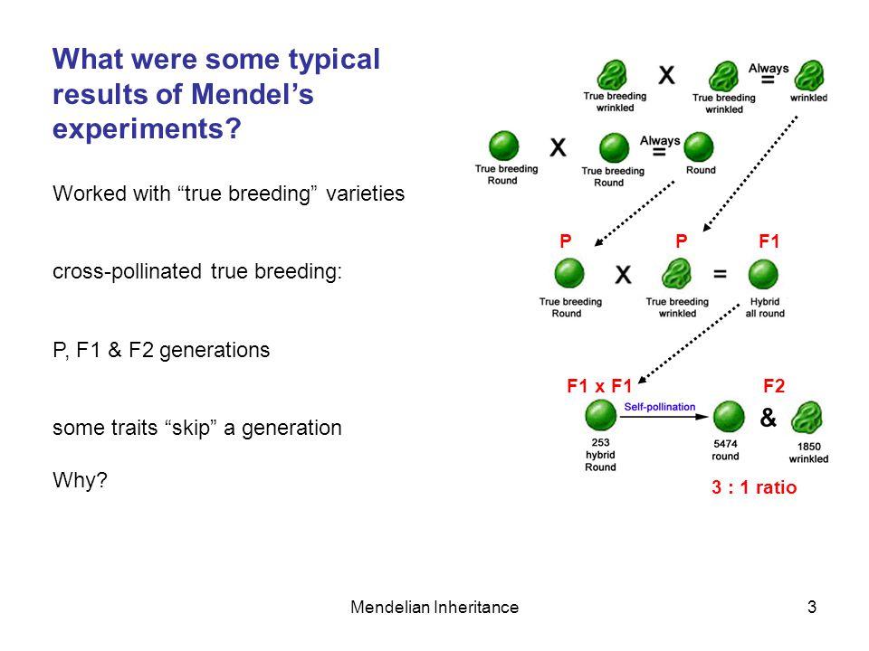 Mendelian Inheritance4 Why do traits sometimes 'skip' a generation.