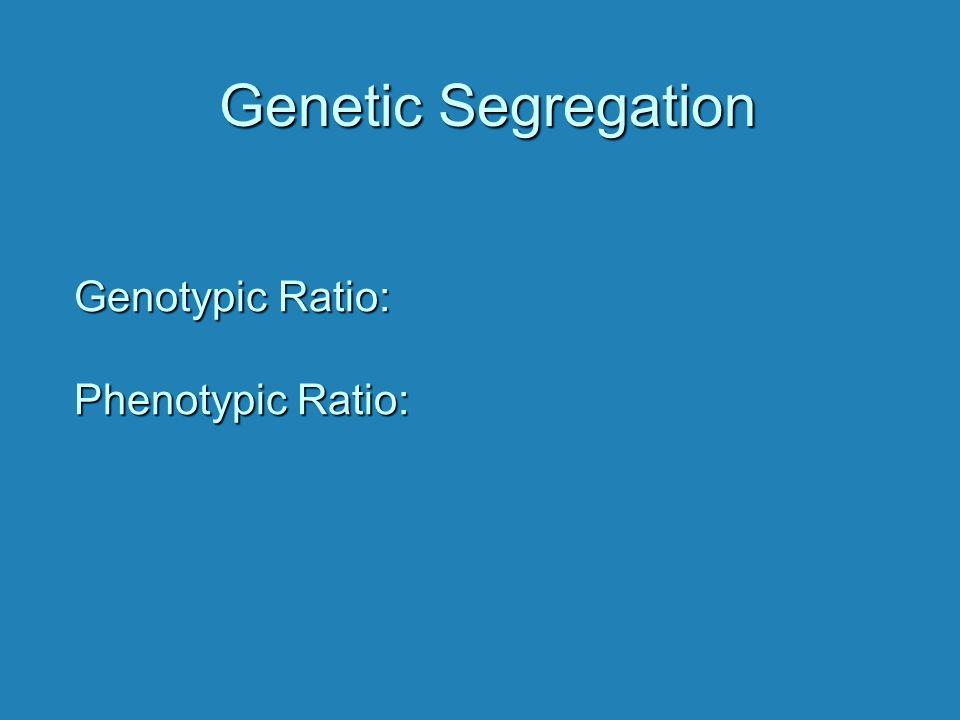 Genetic Segregation Genotypic Ratio: Phenotypic Ratio:
