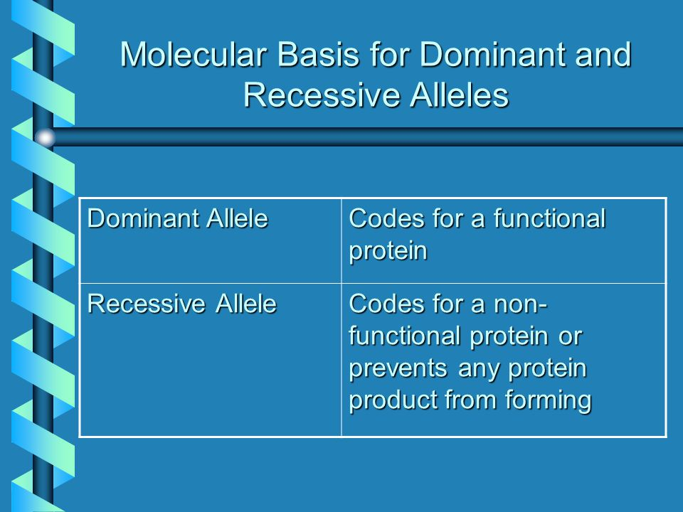 Molecular Basis for Dominant and Recessive Alleles Dominant Allele Codes for a functional protein Recessive Allele Codes for a non- functional protein