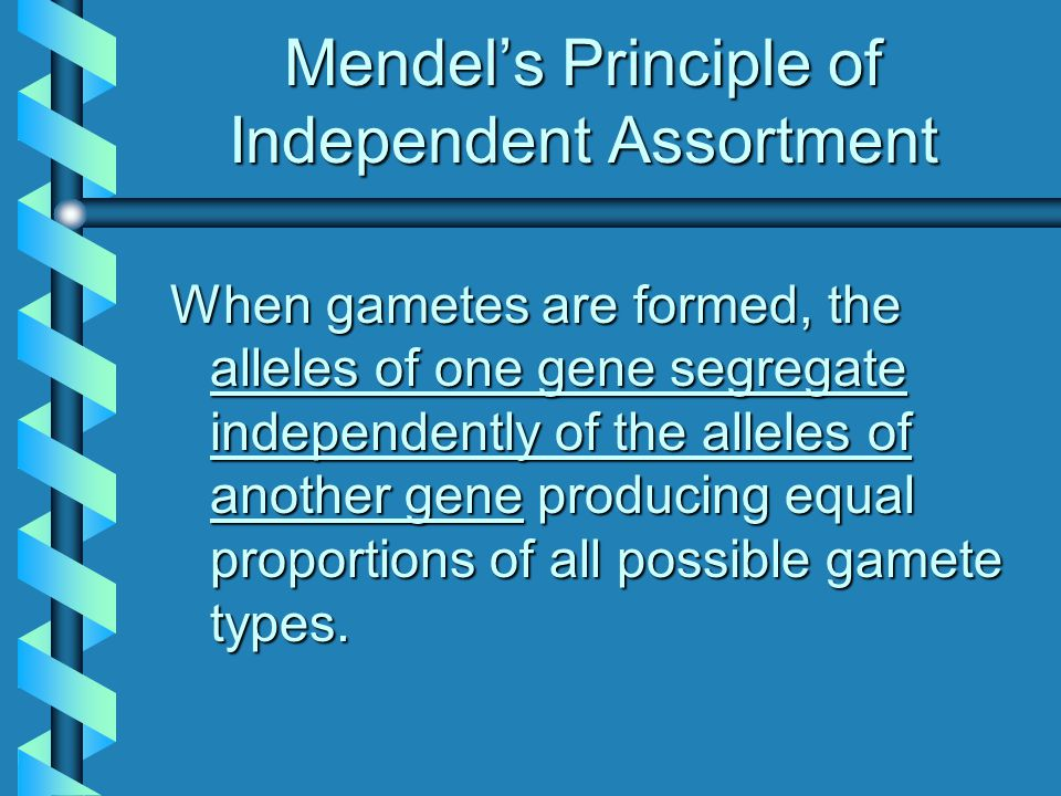 Mendel's Principle of Independent Assortment When gametes are formed, the alleles of one gene segregate independently of the alleles of another gene gene producing equal proportions of all possible gamete types.