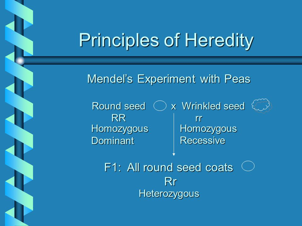 Principles of Heredity HomozygousDominantHomozygousRecessive Heterozygous Mendel's Experiment with Peas Round seed x Wrinkled seed Round seed x Wrinkl