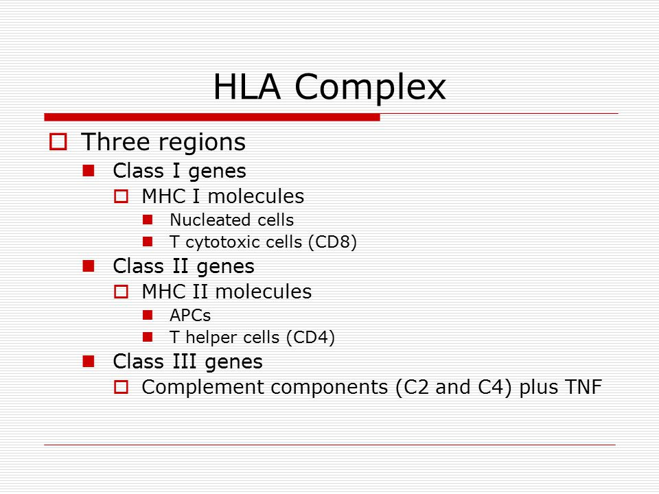 HLA Complex  Three regions Class I genes  MHC I molecules Nucleated cells T cytotoxic cells (CD8) Class II genes  MHC II molecules APCs T helper cells (CD4) Class III genes  Complement components (C2 and C4) plus TNF