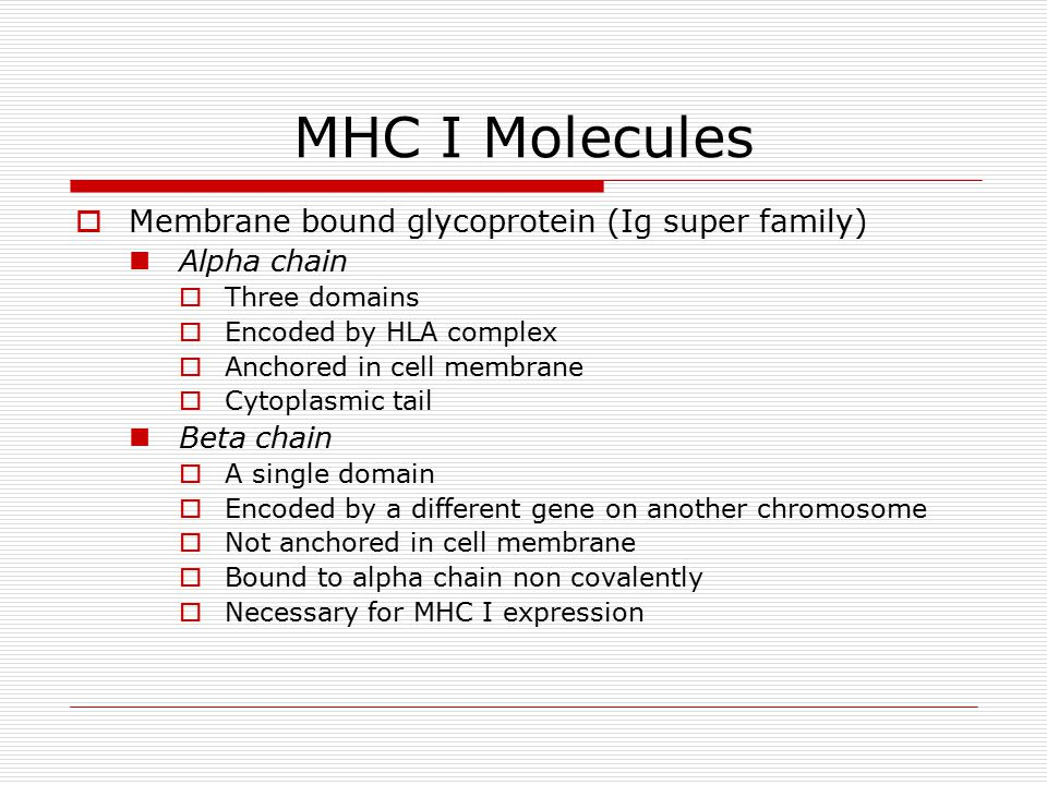 MHC I Molecules  Membrane bound glycoprotein (Ig super family) Alpha chain  Three domains  Encoded by HLA complex  Anchored in cell membrane  Cytoplasmic tail Beta chain  A single domain  Encoded by a different gene on another chromosome  Not anchored in cell membrane  Bound to alpha chain non covalently  Necessary for MHC I expression