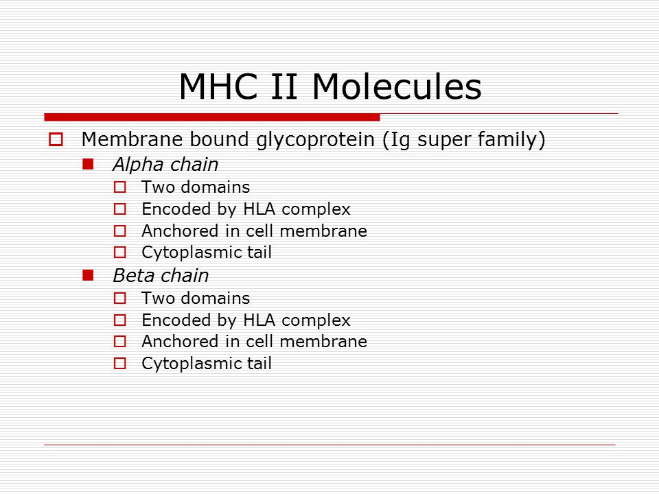 MHC II Molecules  Membrane bound glycoprotein (Ig super family) Alpha chain  Two domains  Encoded by HLA complex  Anchored in cell membrane  Cytoplasmic tail Beta chain  Two domains  Encoded by HLA complex  Anchored in cell membrane  Cytoplasmic tail