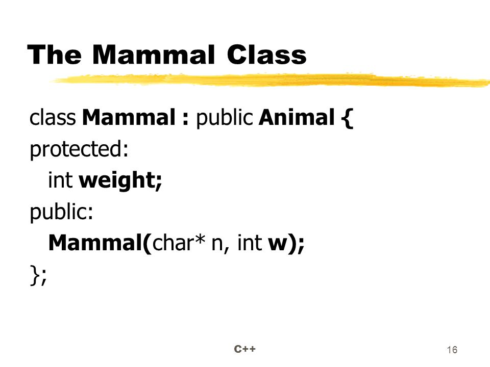 C++ 16 The Mammal Class class Mammal : public Animal { protected: int weight; public: Mammal(char* n, int w); };