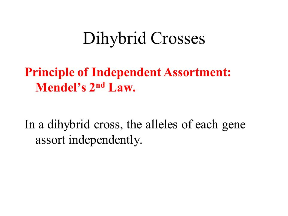Dihybrid Crosses Principle of Independent Assortment: Mendel's 2 nd Law. In a dihybrid cross, the alleles of each gene assort independently.