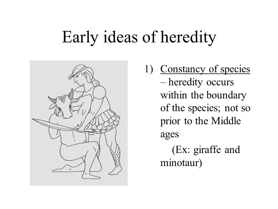 Early ideas of heredity 1)Constancy of species – heredity occurs within the boundary of the species; not so prior to the Middle ages (Ex: giraffe and