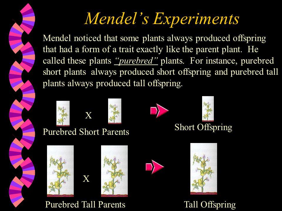 Mendel' Pea Plants Mendel based his laws on his studies of garden pea plants.