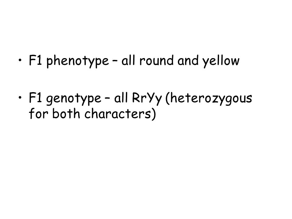 F1 phenotype – all round and yellow F1 genotype – all RrYy (heterozygous for both characters)