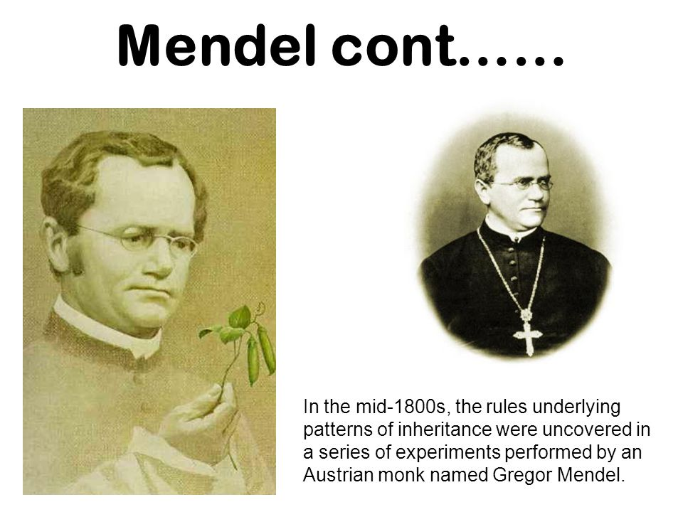 Mendel s Plant Breeding Experiments Gregor Mendel was one of the first to apply an experimental approach to the question of inheritance.