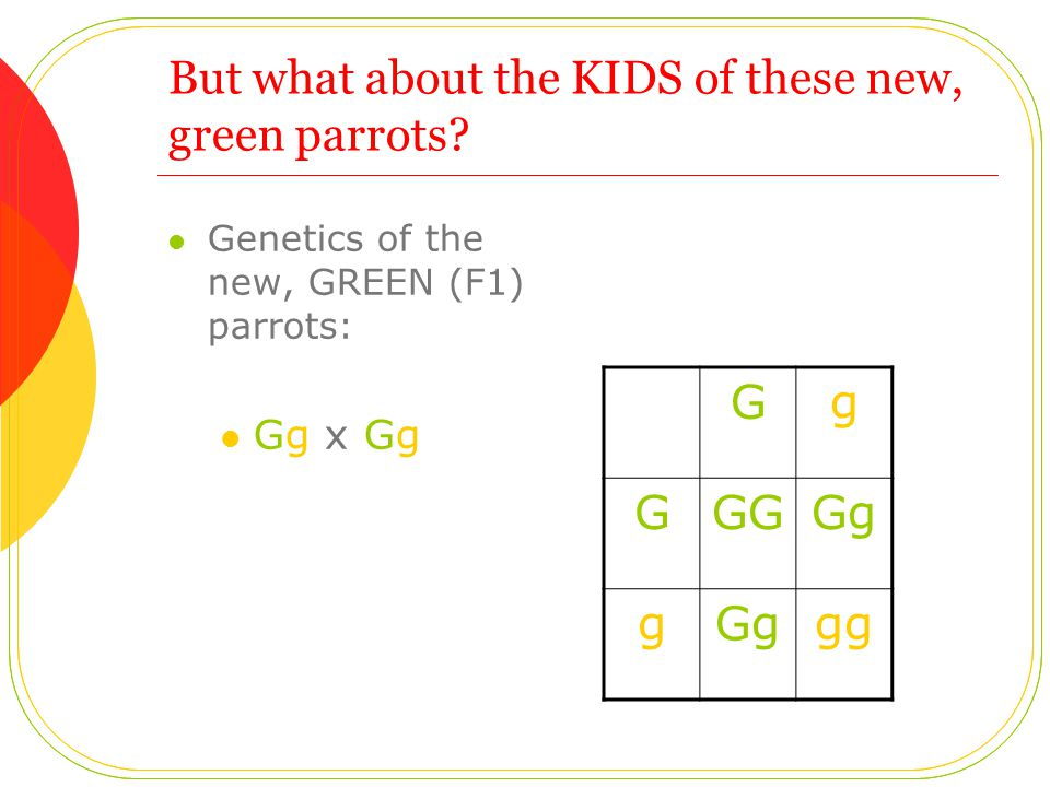 But what about the KIDS of these new, green parrots.