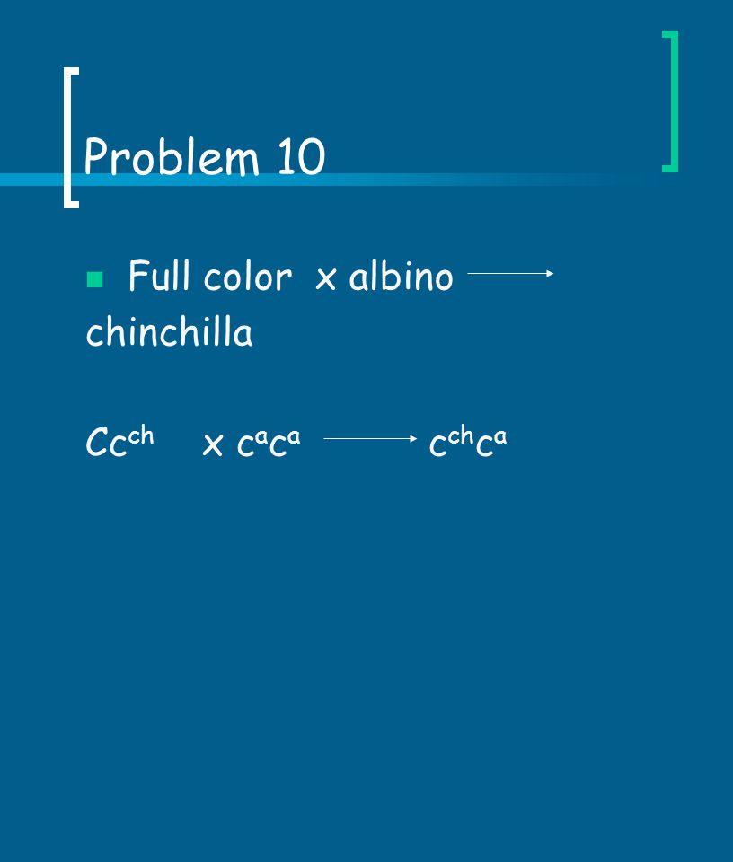 Problem 10 Full color x albino chinchilla Cc ch x c a c a c ch c a