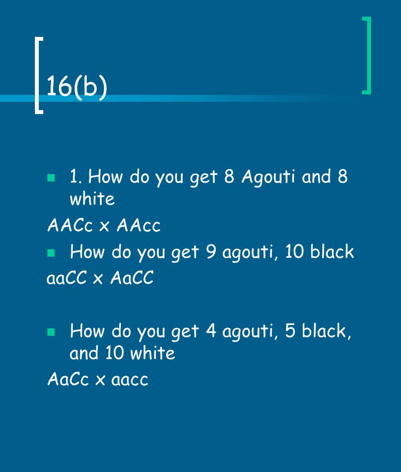 16(b) 1. How do you get 8 Agouti and 8 white AACc x AAcc How do you get 9 agouti, 10 black aaCC x AaCC How do you get 4 agouti, 5 black, and 10 white
