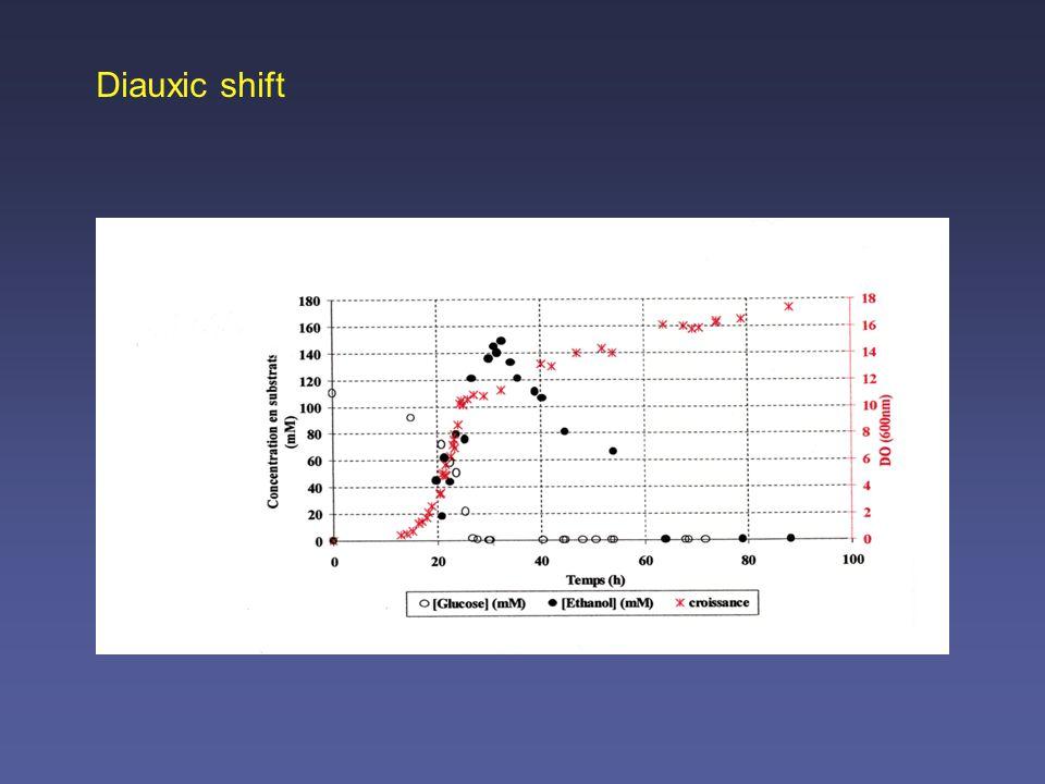 Diauxic shift: Induction of glyoxylate pathway dehydrogenases and Krebs cycle enzymes oxidative phosphorylation gluconeogenesis