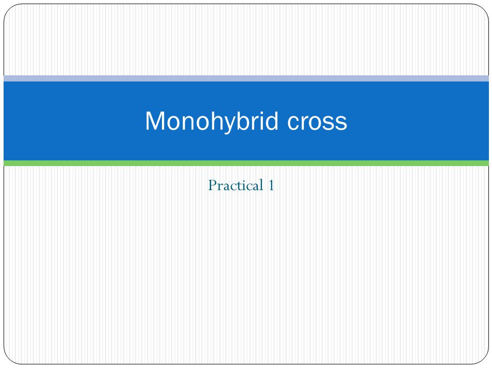 Practical 1 Monohybrid cross