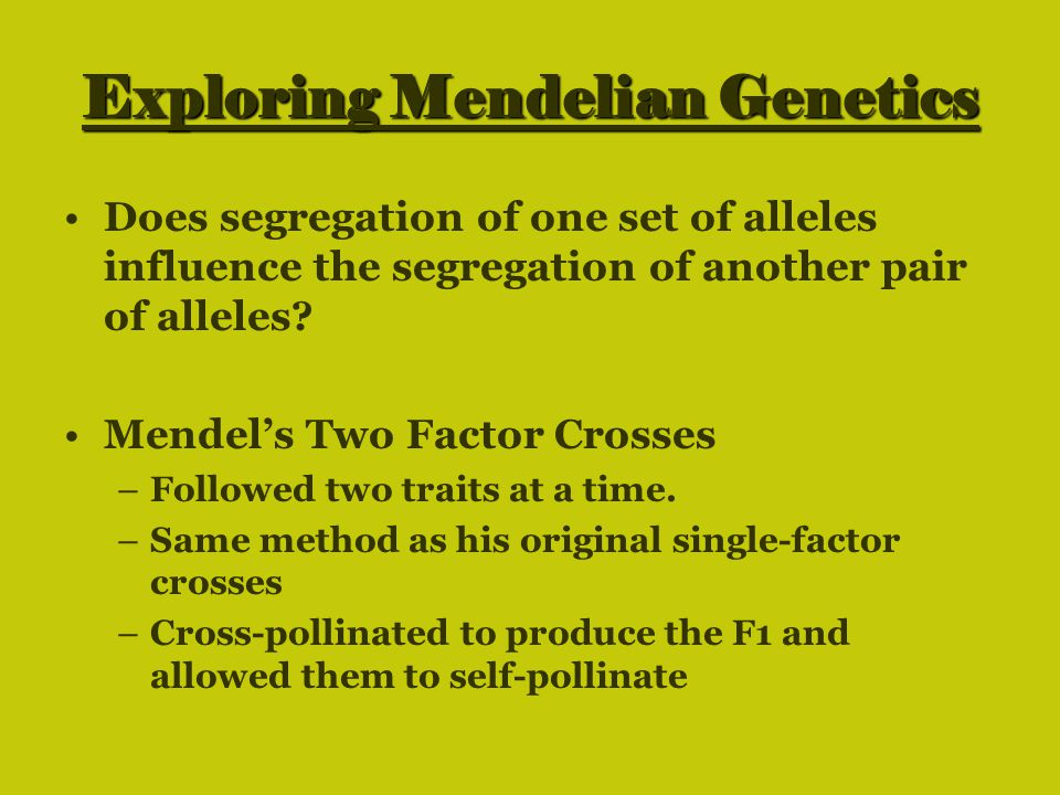 Exploring Mendelian Genetics Does segregation of one set of alleles influence the segregation of another pair of alleles? Mendel's Two Factor Crosses