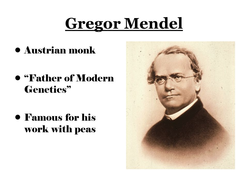 Image result for gregor mendel cross pollination