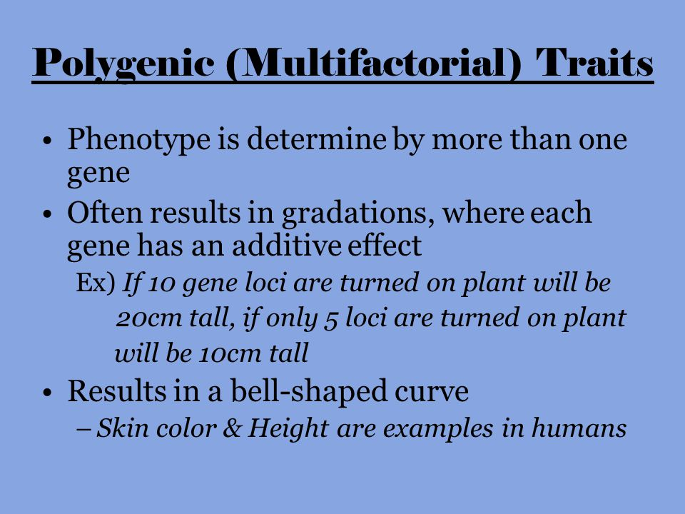 Polygenic (Multifactorial) Traits Phenotype is determine by more than one gene Often results in gradations, where each gene has an additive effect Ex)