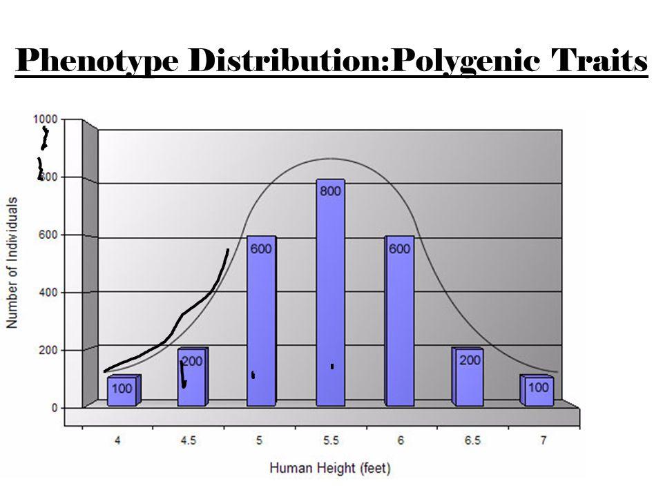 Phenotype Distribution:Polygenic Traits