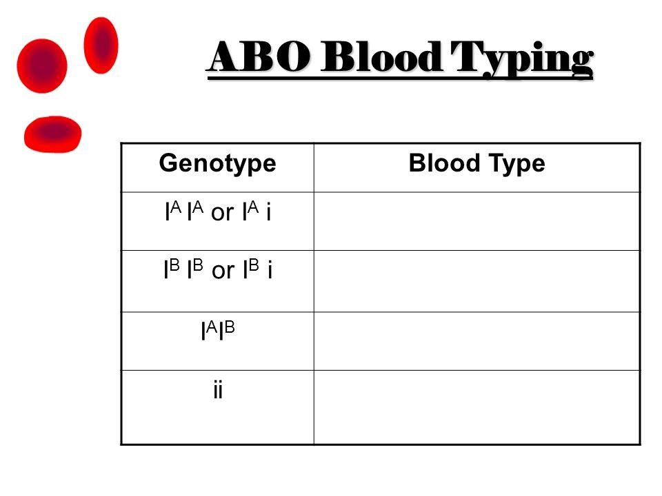 ABO Blood Typing GenotypeBlood Type I A I A or I A i I B I B or I B i IAIBIAIB ii