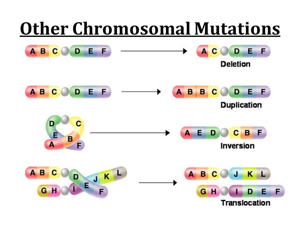 Other Chromosomal Mutations